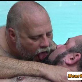 Polar bear trasando com maduro piscina